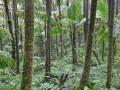 rain_forest.jpg