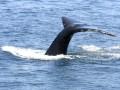 whalewatch.jpg